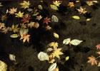 (写真)紅葉。伊那谷の紅葉は見所がいっぱい。中央アルプス、南アルプス、伊那山脈など。
