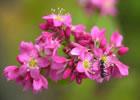 (写真)そばの花。春には梨・りんご・桃の果樹園のお花畑。秋にはそばの花、季節に合わせて花の見所がたくさんあります。